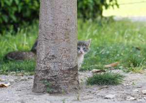 Image of small kitten peeking out from behind a tree trunk